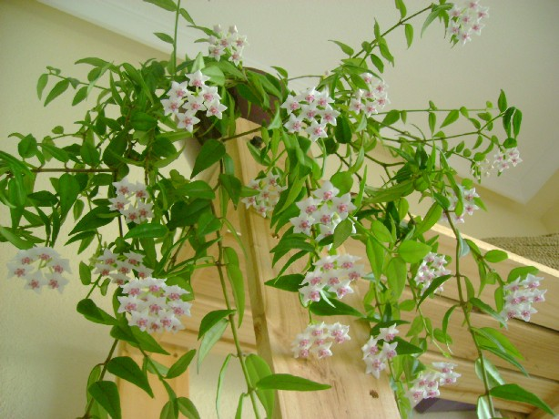 Plantas de sombra on pinterest no se llamas and lilies for Infos jardin