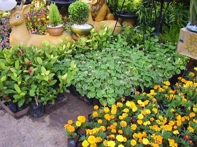 El jardín de Tony en Paraguay  Página 9