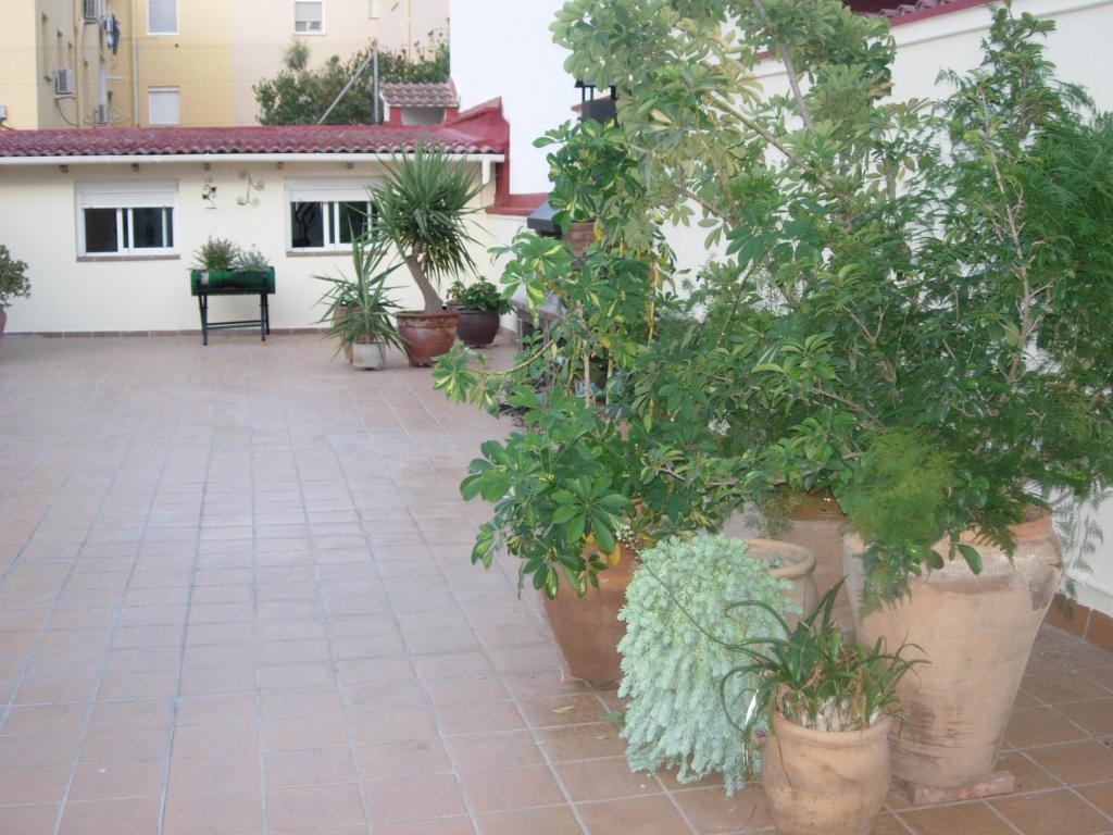 Ayuda con distribuci n de plantas en una terraza - Plantas terraza ...