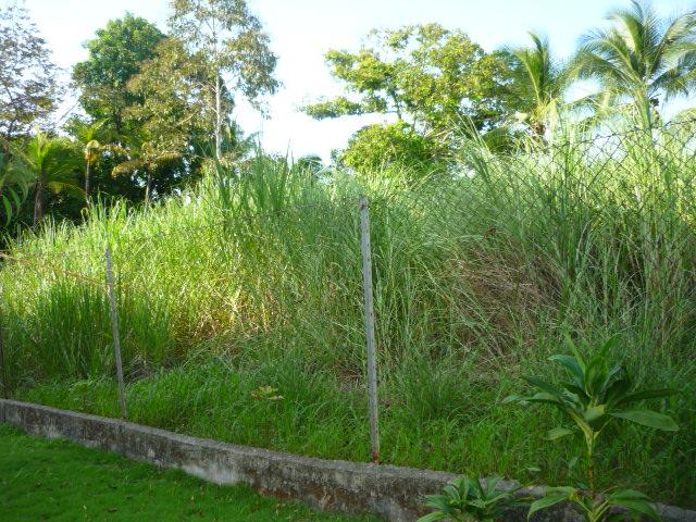 Garrapatas c mo se reproducen por qu hay diferentes - Cortar hierba alta ...