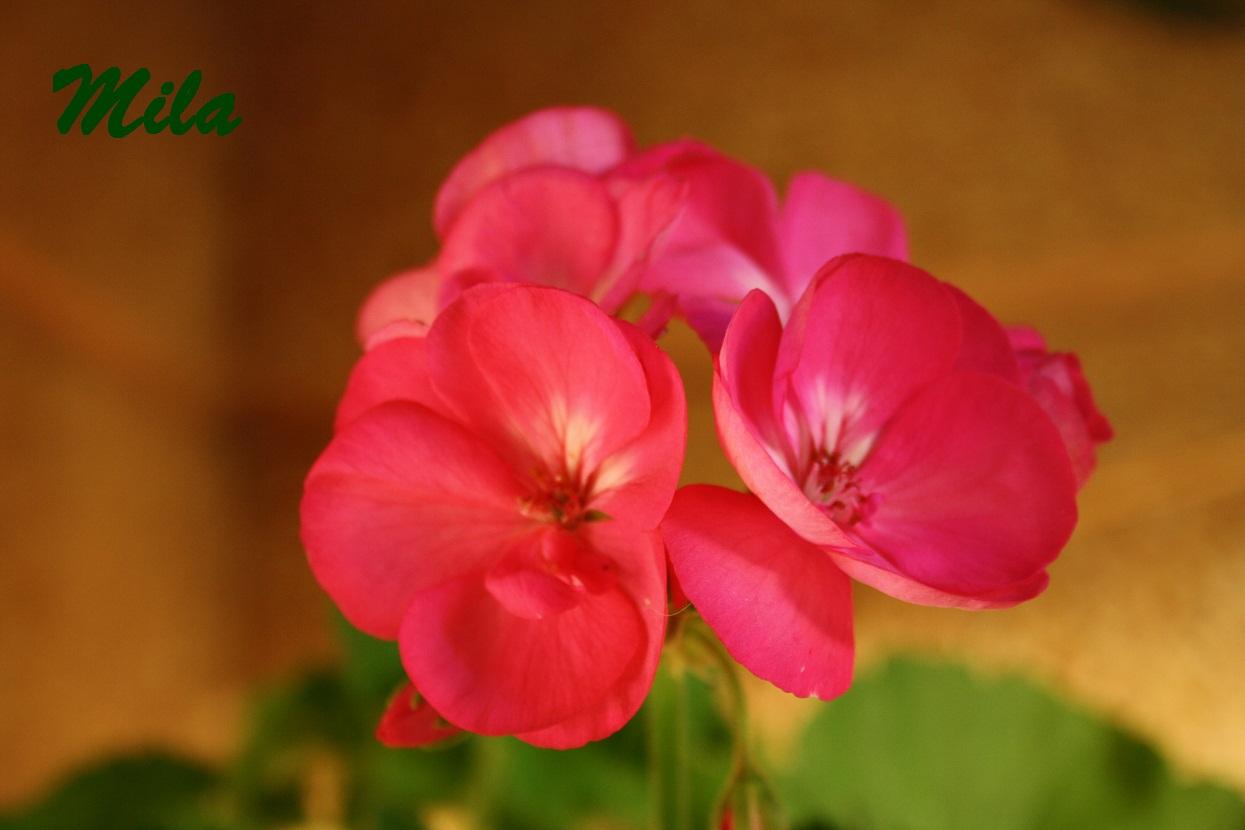 Flores de temporada del 2010 p gina 10 for Plantas temporada