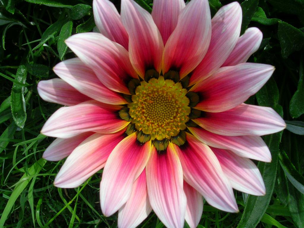 Las maravillas de la vida las flores - Clases de flores y sus nombres ...