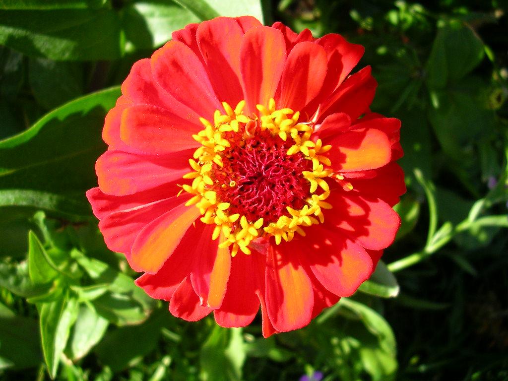 Galeria de imagenes de las flores imagenes de los tipos for Infos jardin