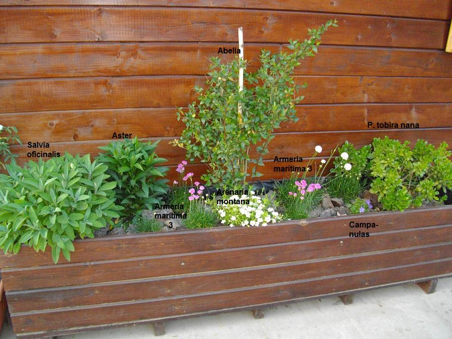 Plantas para jardineras dise os arquitect nicos for Jardineras para interiores