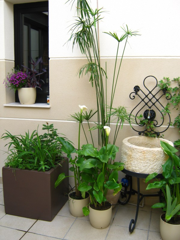 Decorar mi patio con plantas for Como decorar mi patio