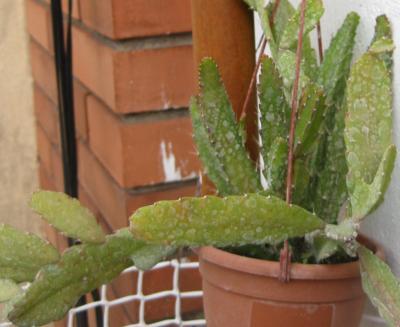 Id porfavor cactus suculentas - Infojardin cactus ...