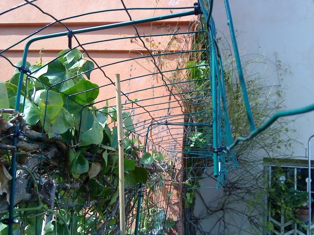 Evitar gato escape collar y valla invisible - Cerrar valla jardin ...