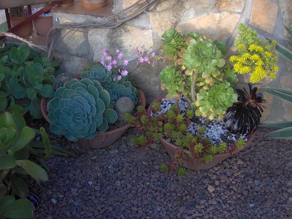 Vuestros cactus invernaderos aire libre terrazas for Infos jardin