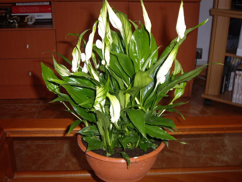 Planta para el ba o con alta humedad bastante oscuro - Plantas en el bano ...