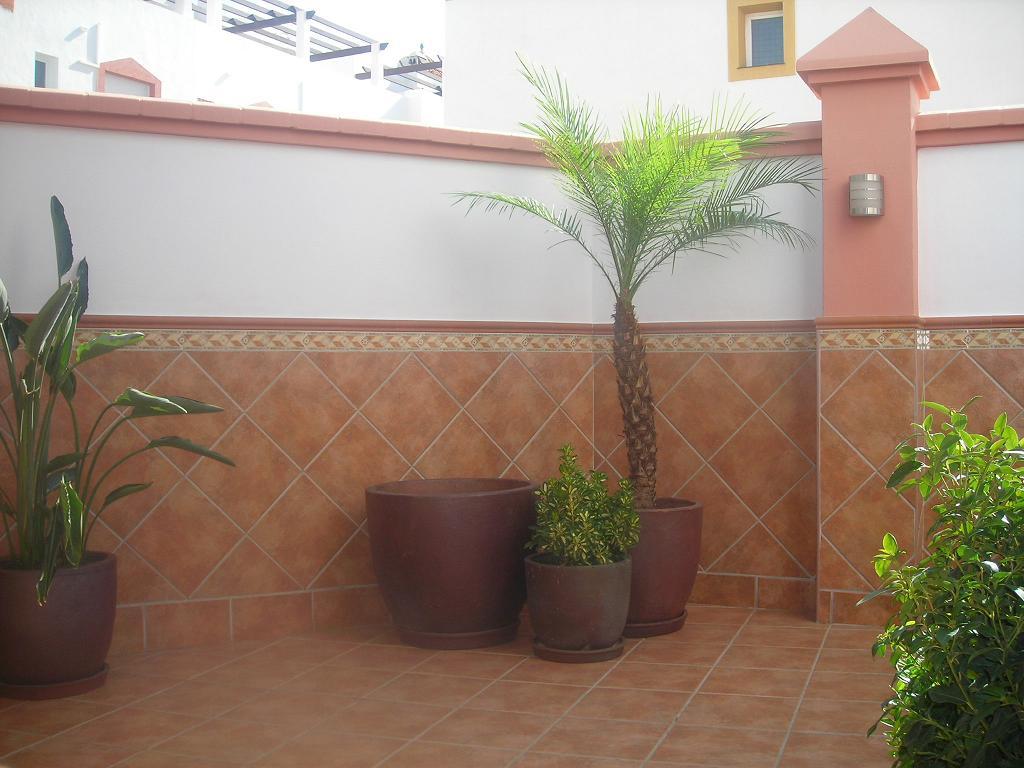 Evoluci n de terraza de melonera cap tulo i p gina 5 - Plantas terraza mucho sol ...