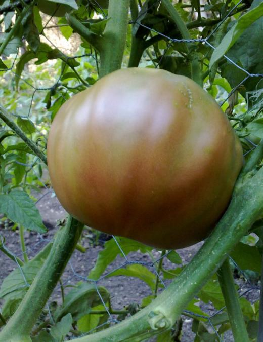 Tutores para tomateras p gina 8 - Tutores para tomates ...