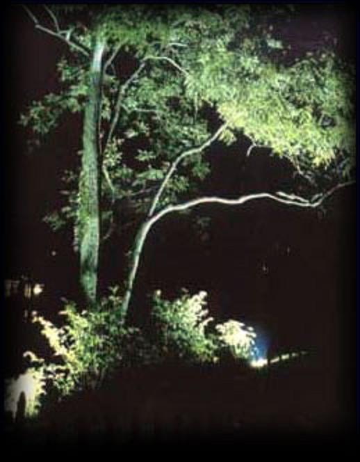 Iluminaci n de jardines nociones b sicas for Iluminar arboles jardin
