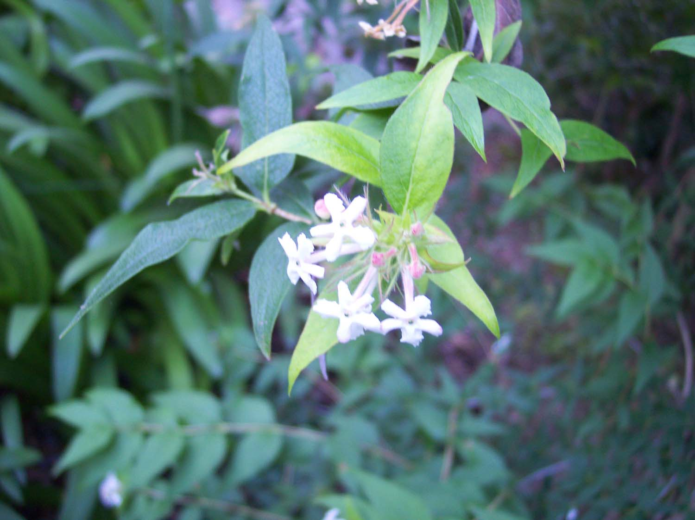 dos plantas ornamentales animated gifs scientists