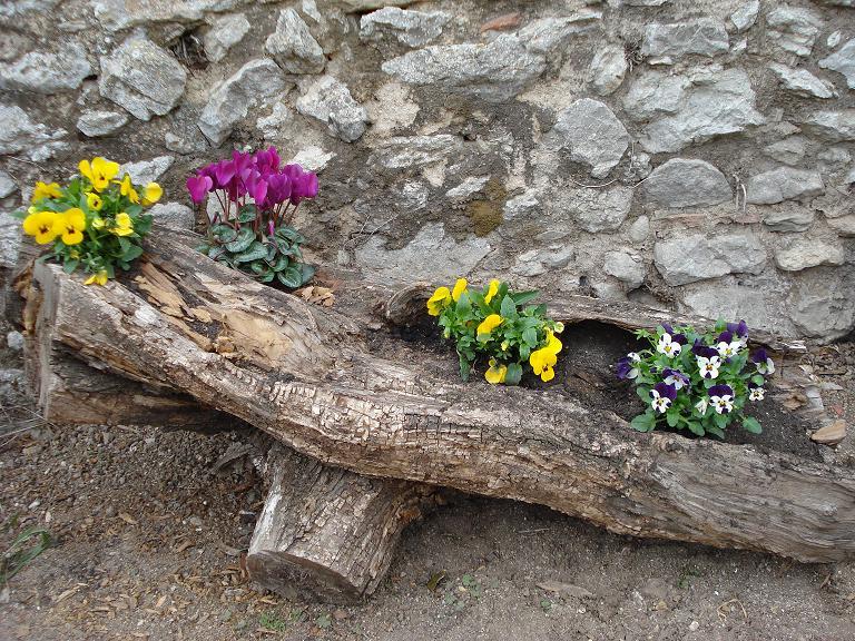 De tronco a jardinera fotos for Que plantas poner en una jardinera