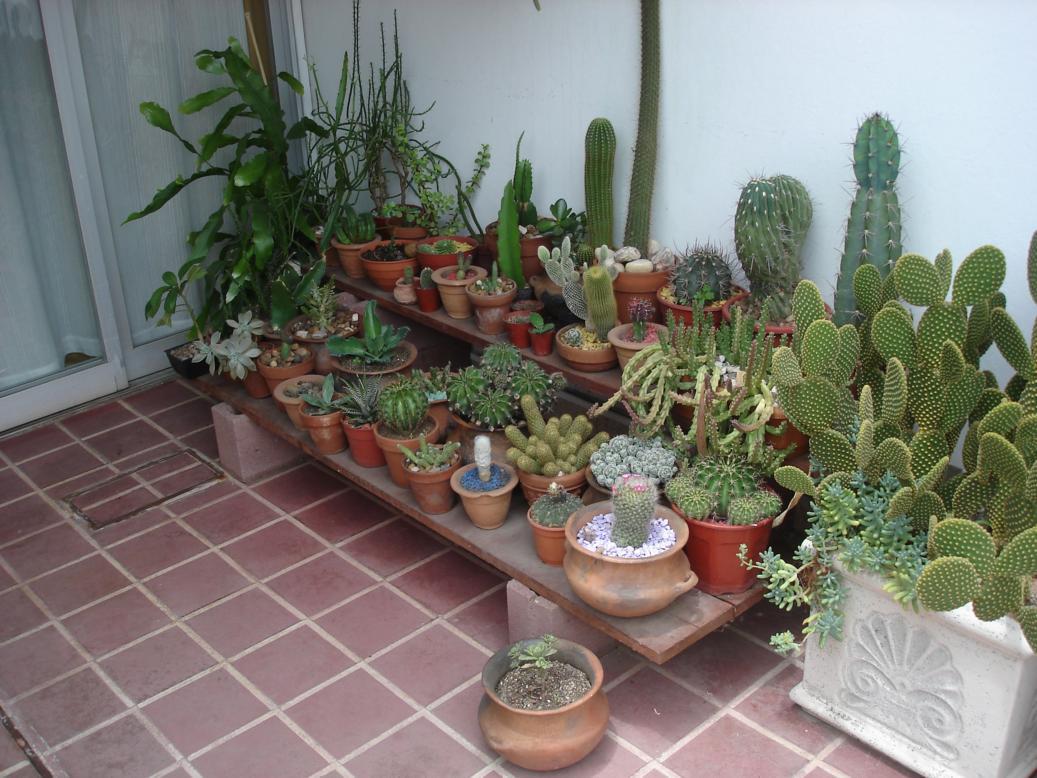 Les presento la coleccion de cactus de mi viejo - Estantes para macetas ...