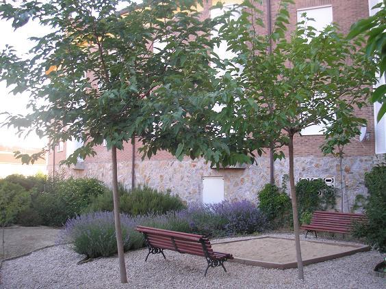 Rboles que den sombra copa amplia acepten en c sped for Arboles de jardin que den sombra