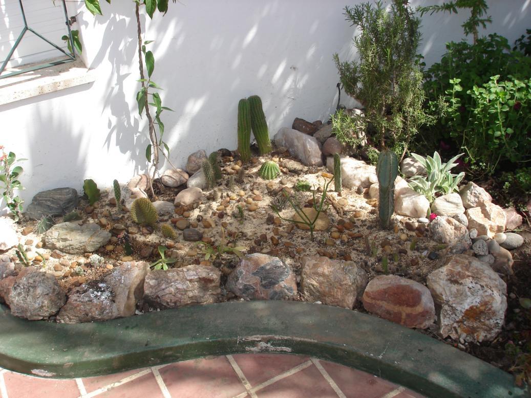 Fotos de suculentas varias y jardines de cactus infojardin - Infojardin cactus ...