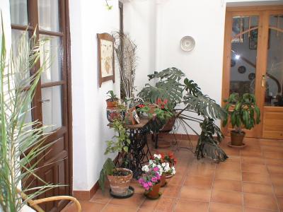 Plantas de interior colgantes que sean f ciles de encontrar - Luces para plantas de interior ...