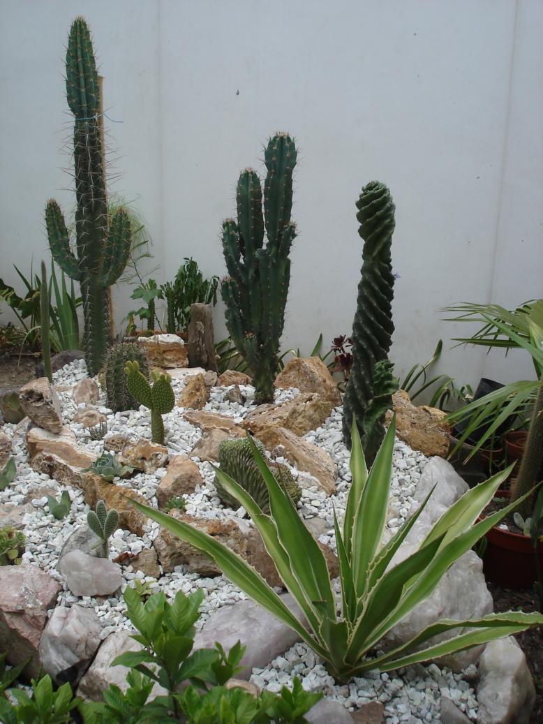 Fotos de rincones de cactus for Fotos de cactus