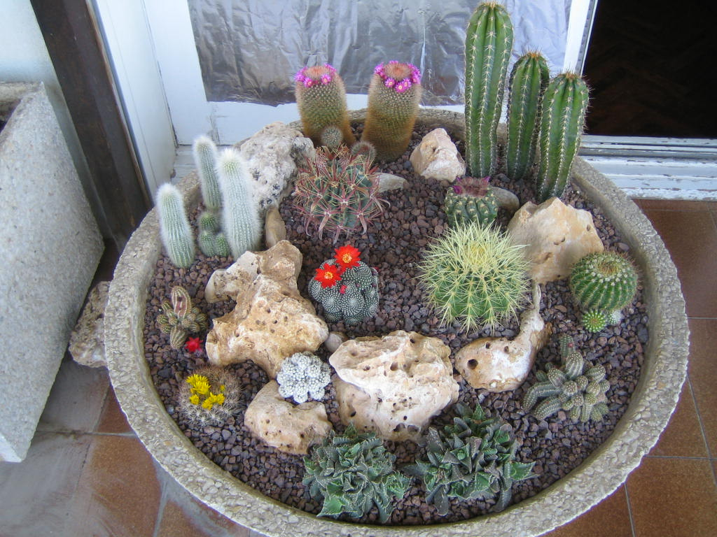Re terrario de cactus pictures for Infos jardin