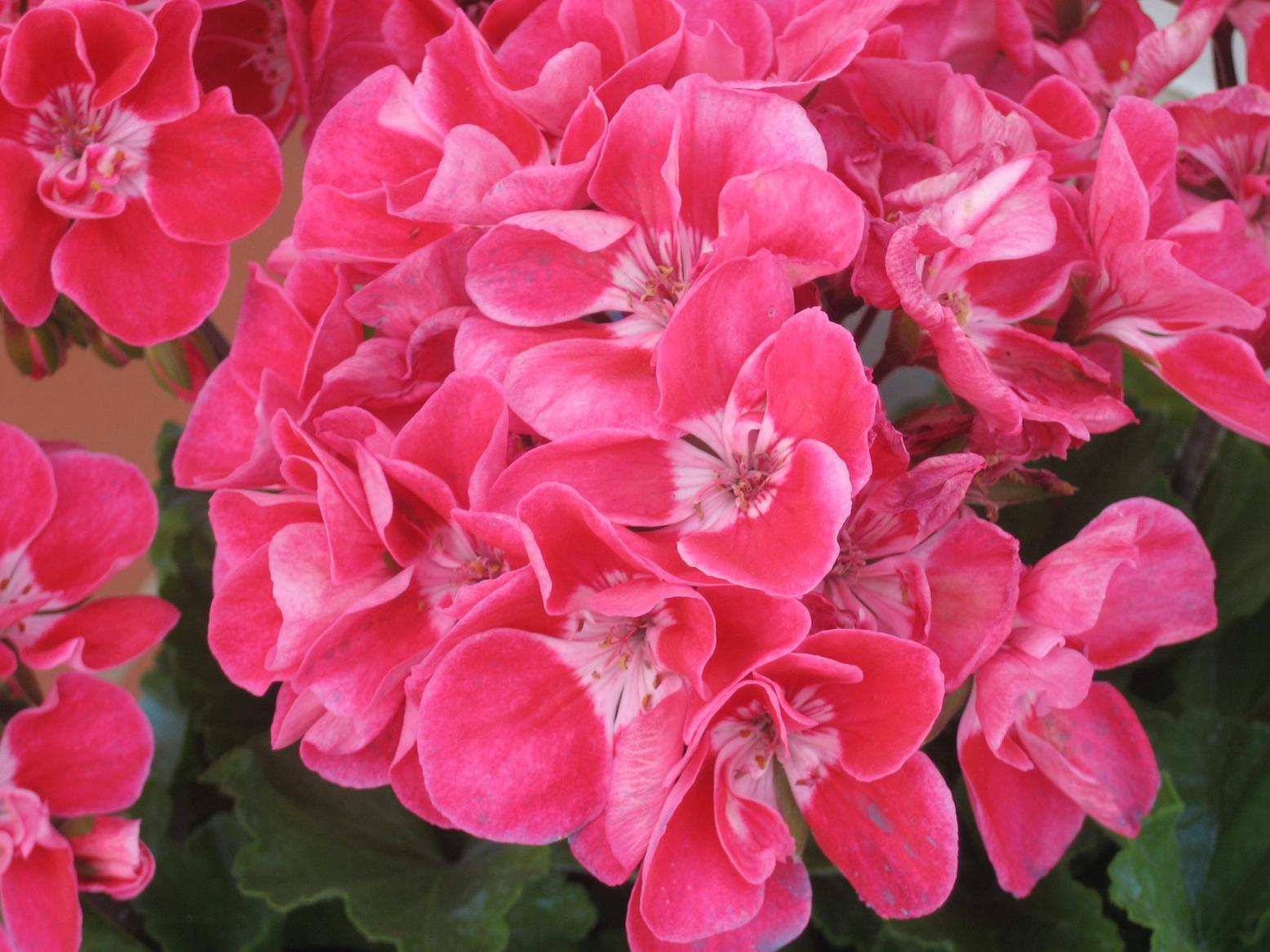 Mis t cnicas de jardiner a en macetas p gina 33 for Paginas de jardineria
