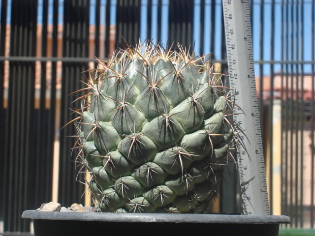 Vivero flor del desierto los asmoles colima for Viveros en colima