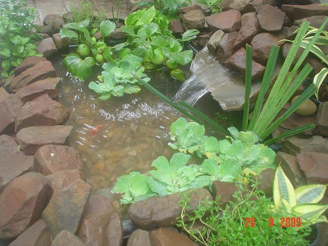Mi estanque no termina de convencerme lo veo mon tono for Estanque koi pequeno