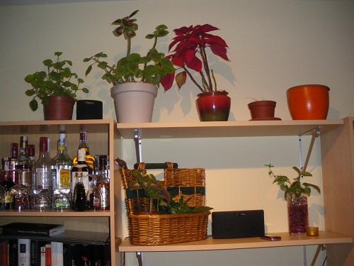 Soportes Para Plantas De Interior Y Organizarlas