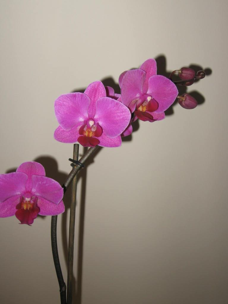 Venta de phals en verdecora for Verdecora zaragoza